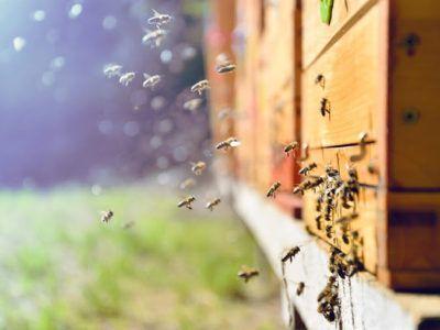 5 claves para emprender que aprendí de las abejas